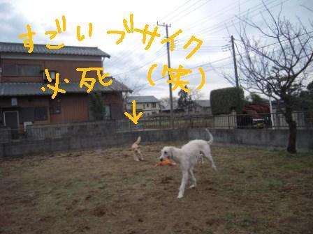 f0176830_20135249.jpg