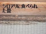 床改修工事_f0031037_19541136.jpg