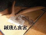 床改修工事_f0031037_19554392.jpg