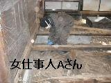 床改修工事_f0031037_20202327.jpg