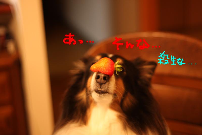 クッキー参上_b0123371_0463836.jpg