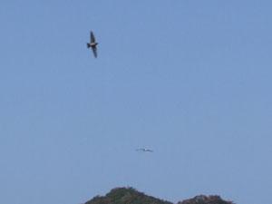 コハクチョウが飛んだ。_e0028387_1702444.jpg