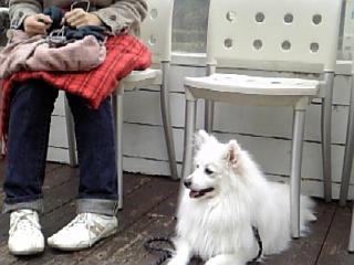 DOG Dept_f0116297_21242132.jpg