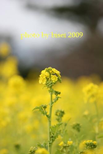 b0132016_17361589.jpg