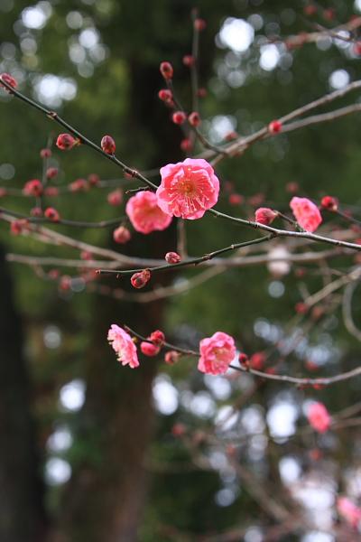 京都甘いもの巡り_e0051888_151308.jpg