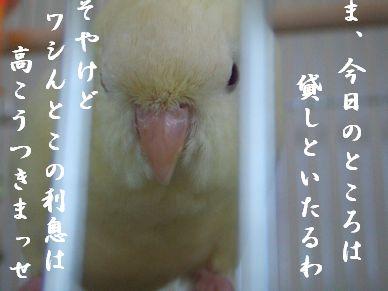 b0082757_1952067.jpg