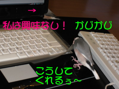 b0158061_20434612.jpg