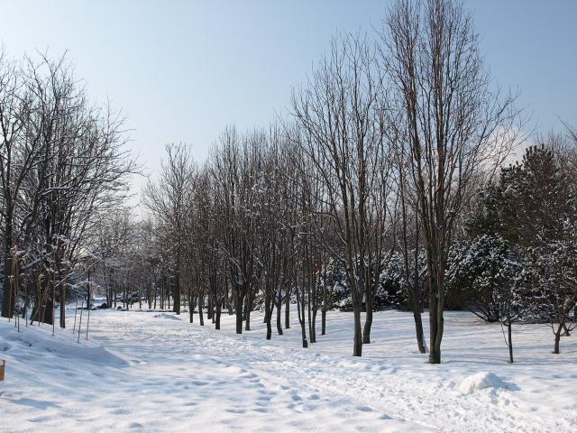 市民文化公園(冬)_d0153062_8333956.jpg