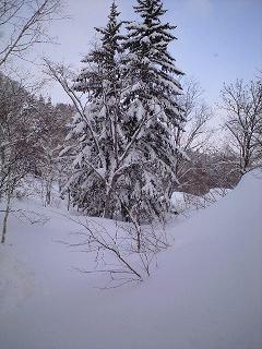 今日は札幌国際スキー場_c0151965_015356.jpg