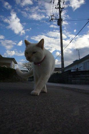 okinawan chanpon._c0153966_2148133.jpg