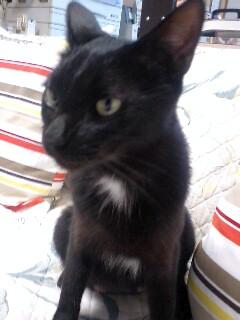 友人宅の、お庭の野良猫ちゃん_c0167175_810027.jpg