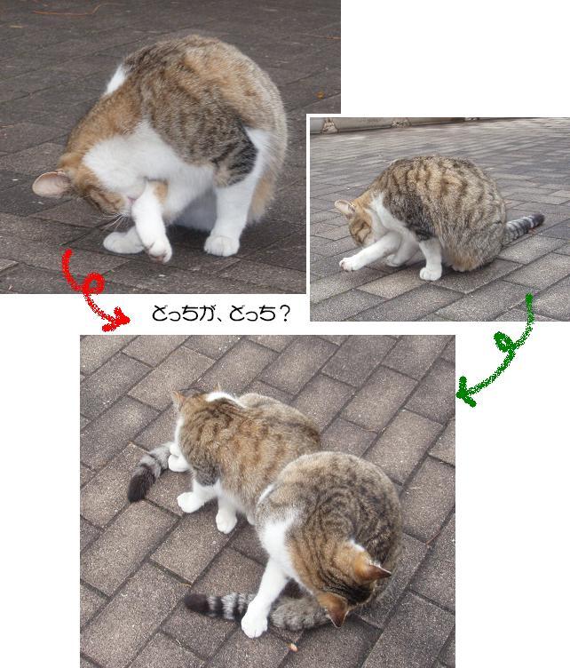 f0101679_20038.jpg