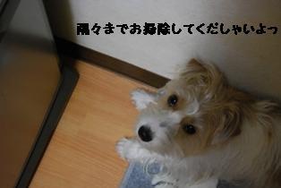 b0137280_1601515.jpg