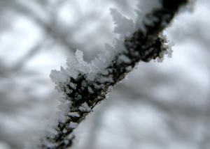 霧氷の朝_e0120896_1003598.jpg
