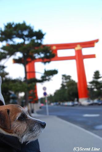 京都 最終日のこと  その2_c0099133_23271331.jpg
