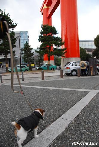 京都 最終日のこと  その2_c0099133_23272519.jpg