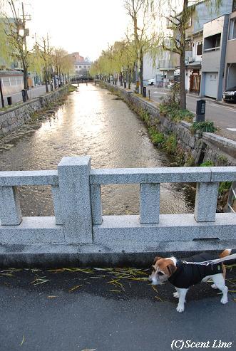 京都 最終日のこと  その2_c0099133_2337237.jpg