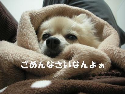 c0179136_2522067.jpg
