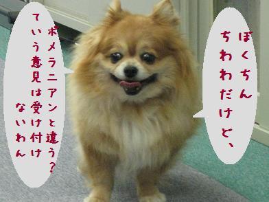 b0151748_13224859.jpg