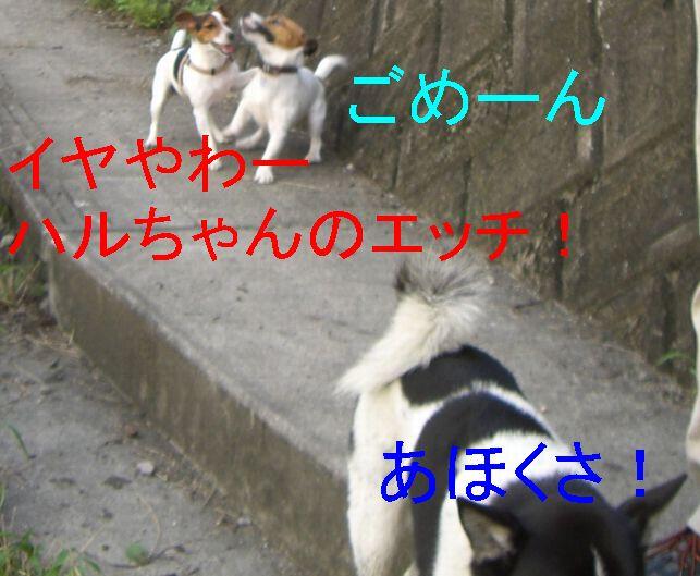 f0053952_14284162.jpg