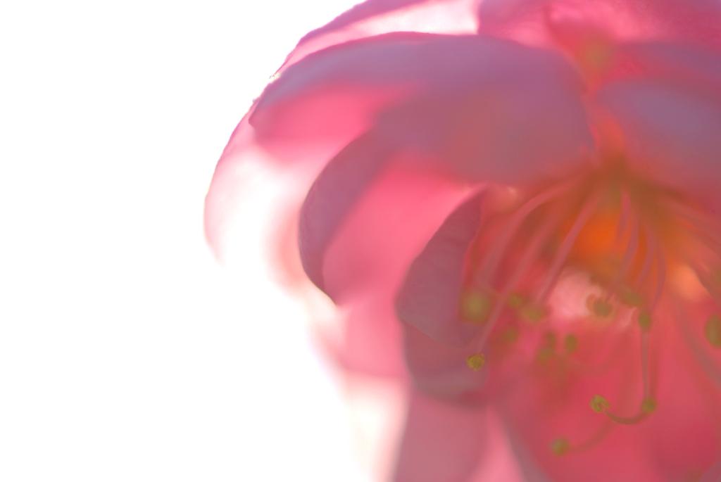 f0163558_0295825.jpg