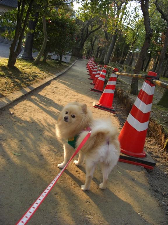 遊歩道は舗装中 _f0106759_6443054.jpg