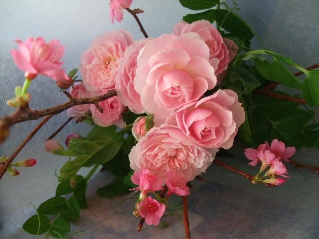 オークリーフ(寒緋桜とバラ・てまりの花束)_f0049672_16594216.jpg