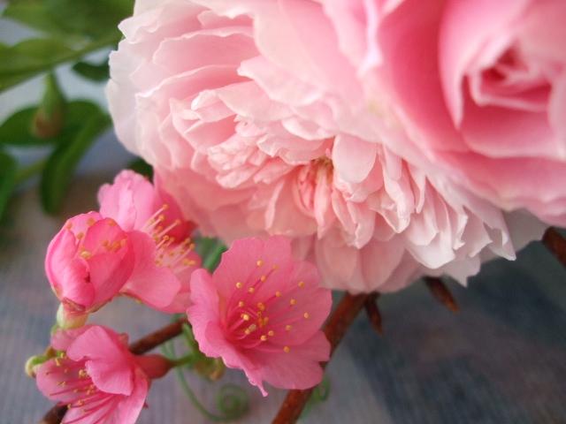 オークリーフ(寒緋桜とバラ・てまりの花束)_f0049672_170215.jpg