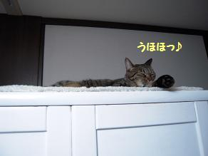 c0139488_1514364.jpg
