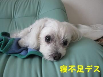 f0145192_2012941.jpg