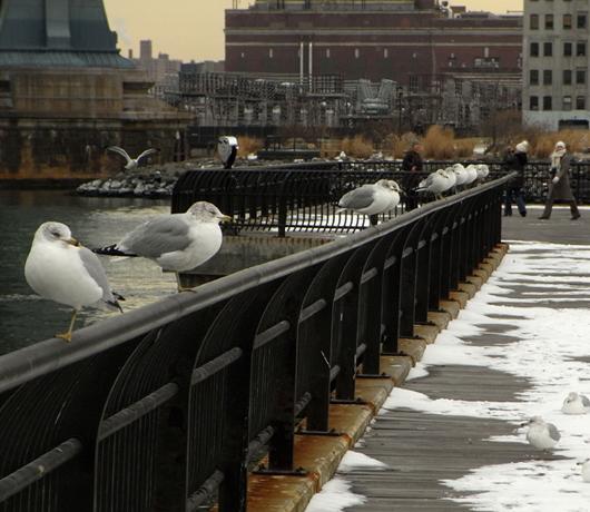 冬のブルックリン・ブリッジ・パークをお散歩_b0007805_13242355.jpg