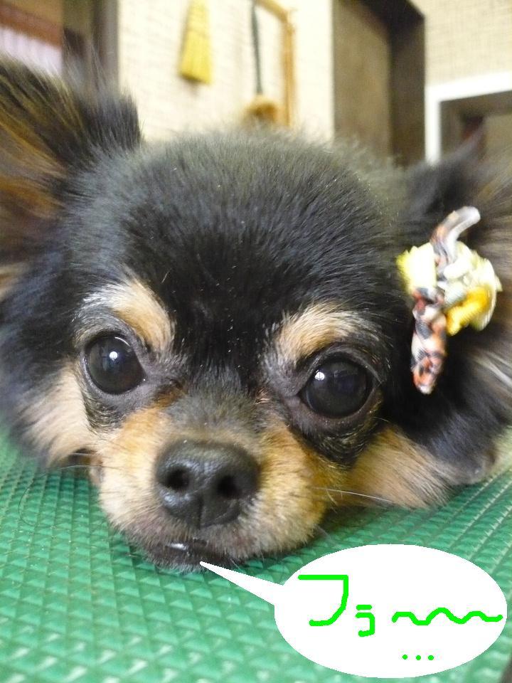 るんるん♪&犬濯屋レシピ。。。_b0130018_14364538.jpg
