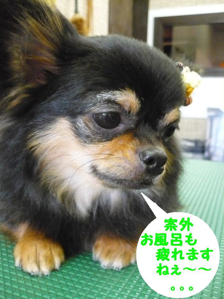 るんるん♪&犬濯屋レシピ。。。_b0130018_14365430.jpg