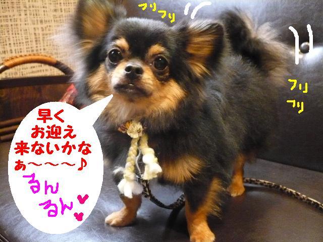 るんるん♪&犬濯屋レシピ。。。_b0130018_14373756.jpg