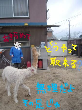 f0176830_17233243.jpg