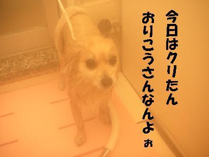 c0179136_258122.jpg