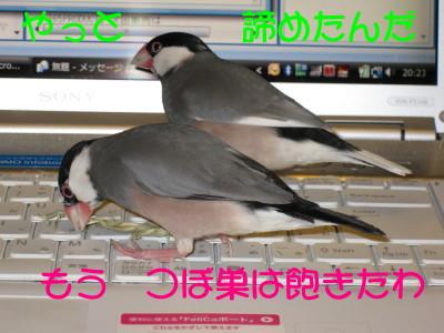 b0158061_2118286.jpg
