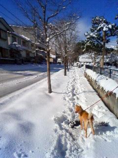 雪かき犬とお殿様_b0123467_1624018.jpg