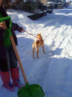 雪かき犬とお殿様_b0123467_16274414.jpg