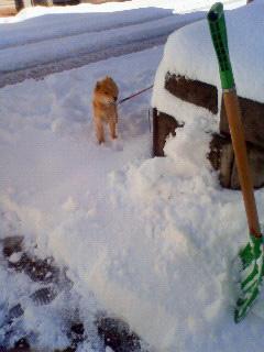雪かき犬とお殿様_b0123467_1629306.jpg