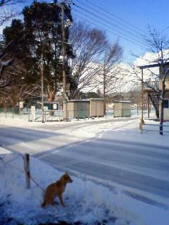 雪かき犬とお殿様_b0123467_1632426.jpg