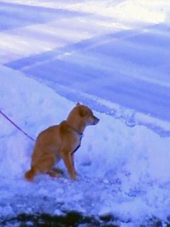 雪かき犬とお殿様_b0123467_163354.jpg