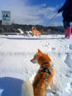 雪かき犬とお殿様_b0123467_1634504.jpg