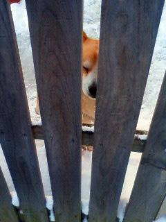 雪かき犬とお殿様_b0123467_1634892.jpg