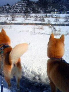 雪かき犬とお殿様_b0123467_16371030.jpg
