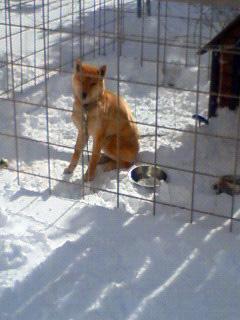 雪かき犬とお殿様_b0123467_16463027.jpg