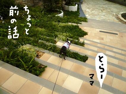 f0170072_0363671.jpg