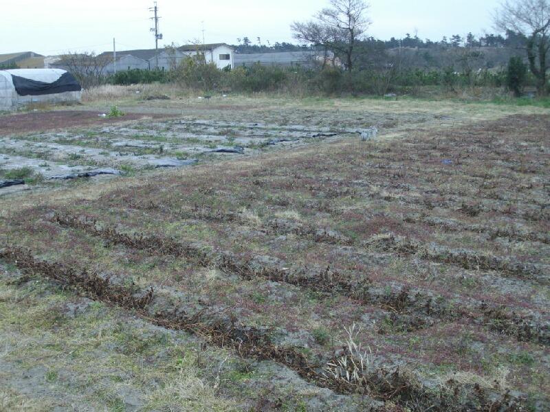 市民農園を借りることになった件_f0018078_16284479.jpg