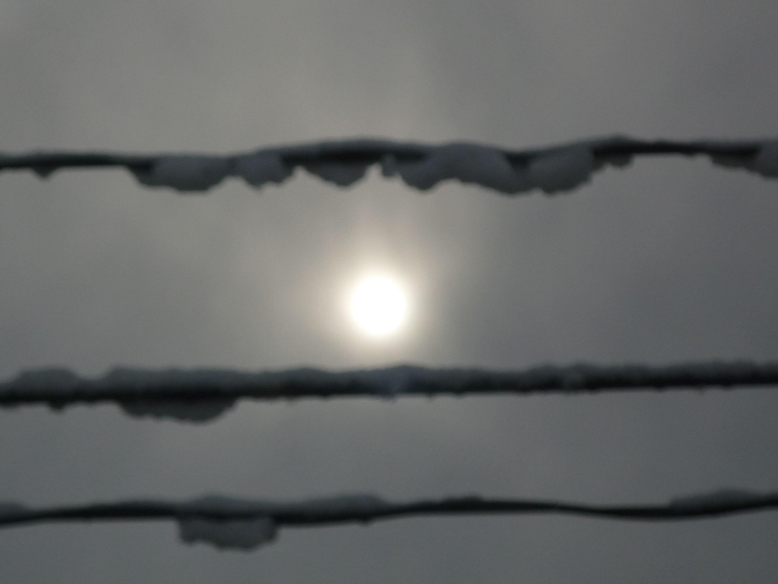 冬の太陽_e0030180_1036366.jpg