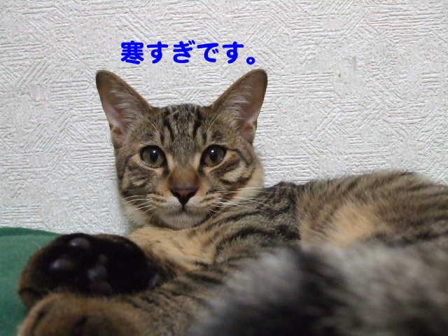 ★Riekoさんの新作が月曜日に入荷します。★_c0108789_17195350.jpg
